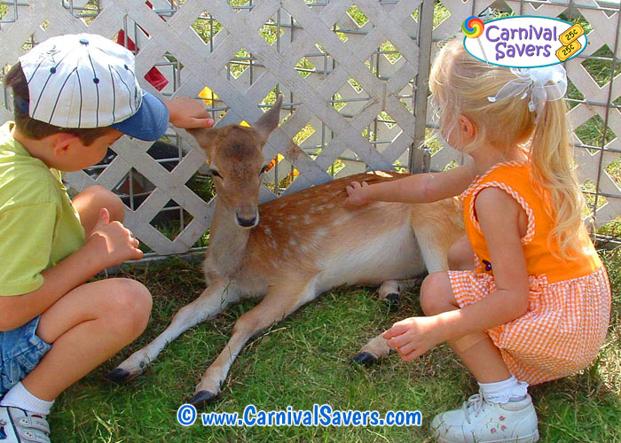 petting-zoo-carnival-game-activity.jpg