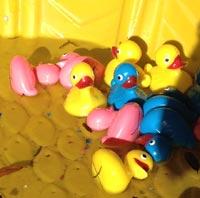 tipping-ducks.jpg